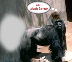 Gorilla Fart